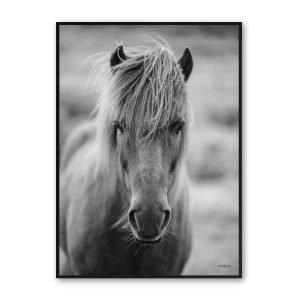 Plakater Hest