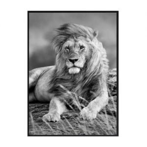 Plakater Løver